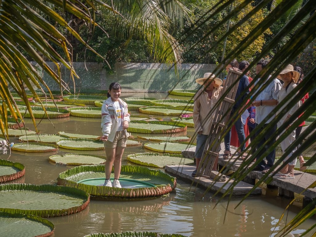Child standing on a giant lotus leaf at Lotus Pagoda